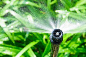 Tacoma Sprinkler